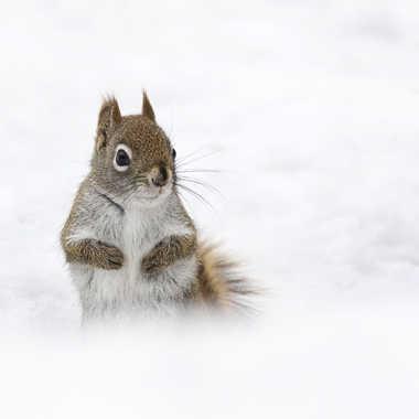 Que l'hiver est long! par nortaillon