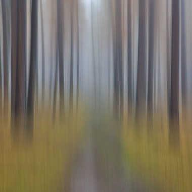 Chemin par Farim