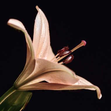 Florale par Buissem