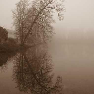 Reflets et brouillard par mamichat