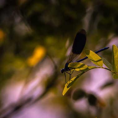 Libellule camouflee par Dav.sv