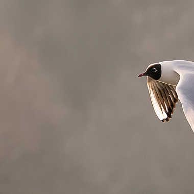 Vol d'un soir... par Nikon78