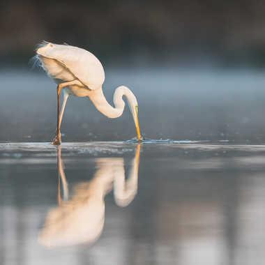 Un poissonnet dans le bec par jeromebouet