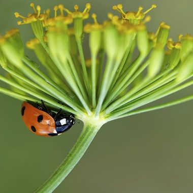 Ombrelle végétale... par Nikon78