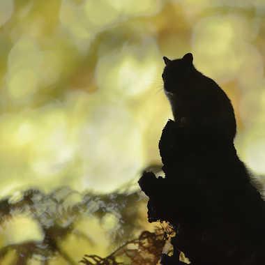 Ambre ... par Nikon78