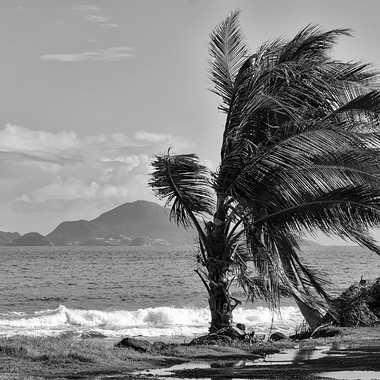 La tempête est passée par là. par patrick69220
