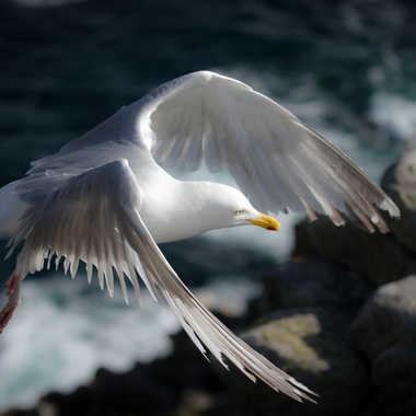 Les ailes de la liberté ! par lolo27