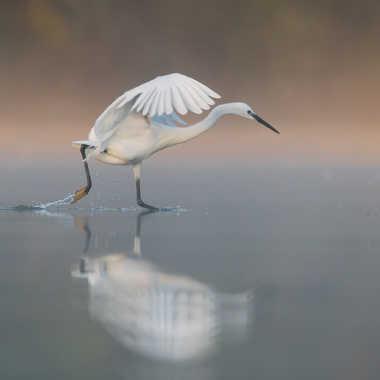 Course sur l'eau par jeromebouet