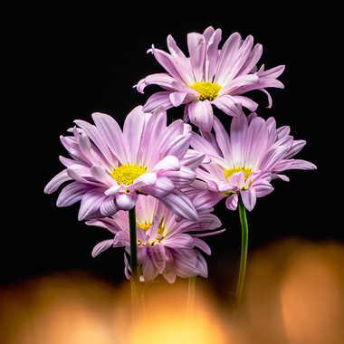 Floraison par Dida