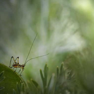 Tout petit ... par Nikon78