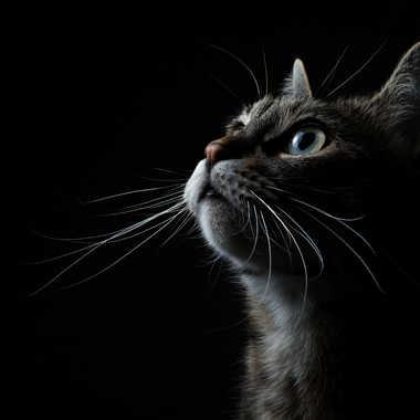 catlight par francoon