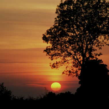 soleil rouge par ROGER46