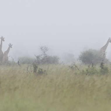 Paysage de plaines africaines au matin par patrick69220