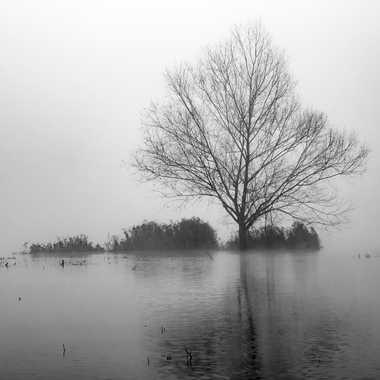 En val de Saône par patrick69220