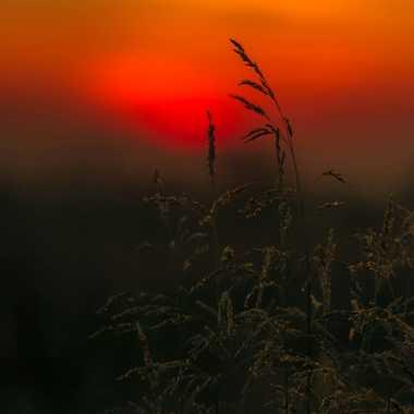 Herbe au coucher de soleil par brj01