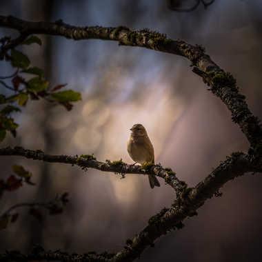L'Oiseau par popy
