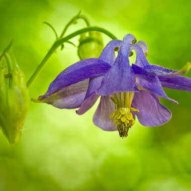 petite fleur. par jose38