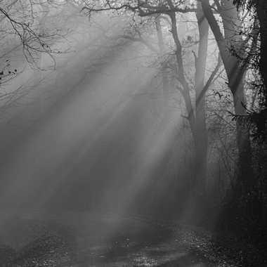 Brouillard matinal par jeromeh