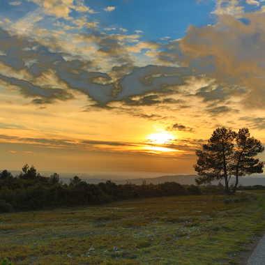 soleil d'hiver en Minervois par andalouse