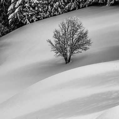 Snow  par jeromeh