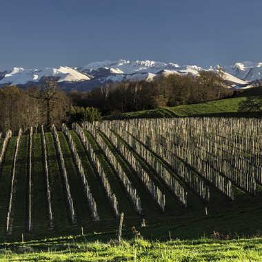 Vignoble du Jurançon par Mylene.Lavie