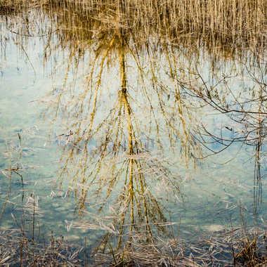 reflet hivernal par sophie38