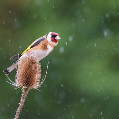 Un jour de pluie par jeromebouet