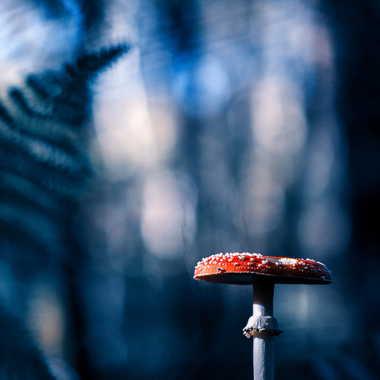 Mushroom night par Emmanuel Graindépice