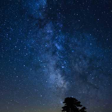 Etoiles et l'arbre par Farim