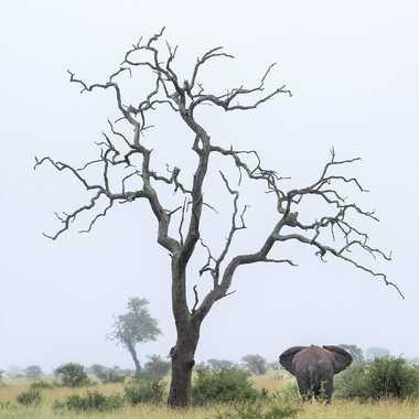Deux géants africains par patrick69220