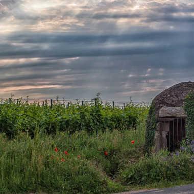Vieux  puits en beaujolais. par patrick69220
