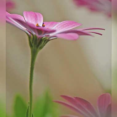 Cadre végétal par Aurimec