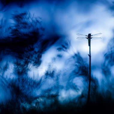AU delà des ténèbres par Emmanuel Graindépice