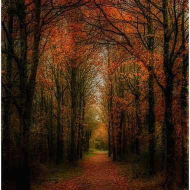 Le chemin .. par grd24ra