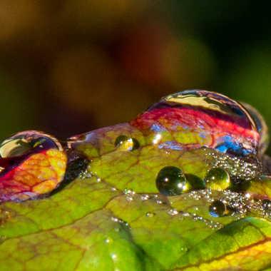 Reflets et couleurs par Philipounien