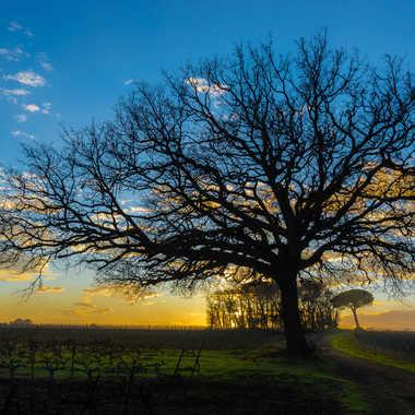 L'arbre a rêves par Dav.sv
