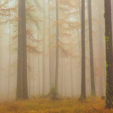 La brume automnale par Farim