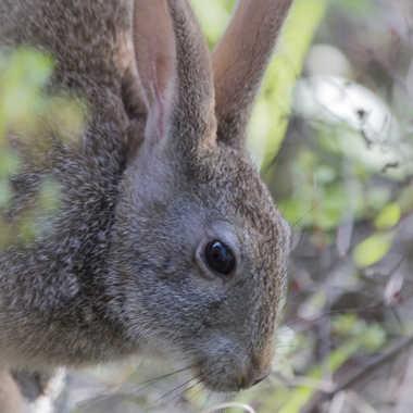 Portrait de lapin par patrick69220