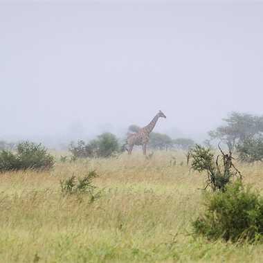 Plaine africaine par patrick69220