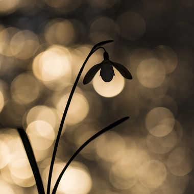 Lampadaire des sous bois par Rene_9363