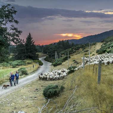 Retour à la bergerie par Philoupi