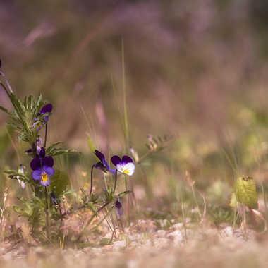 Fleurs sauvages. par patrick69220