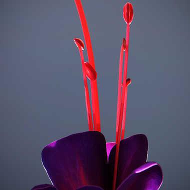 Etincelles végétales par Nikon78