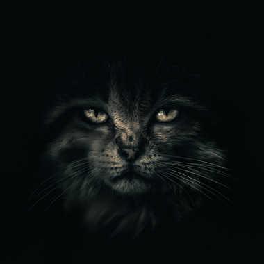 Cheshire , le chat in  Wonderland par james_1068