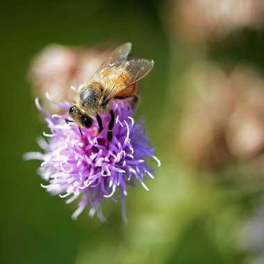 Petite abeille  par Mary00