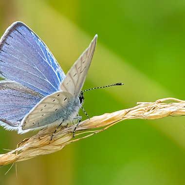 butterfly par Bled_art