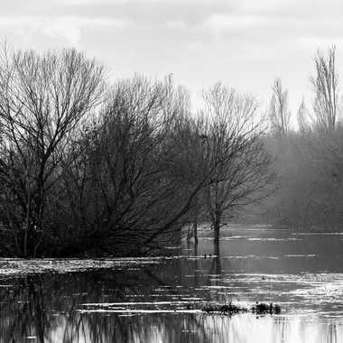 La Saône en NB par patrick69220