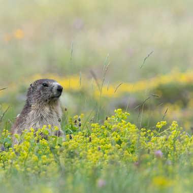 La gardienne de la prairie par jeromebouet