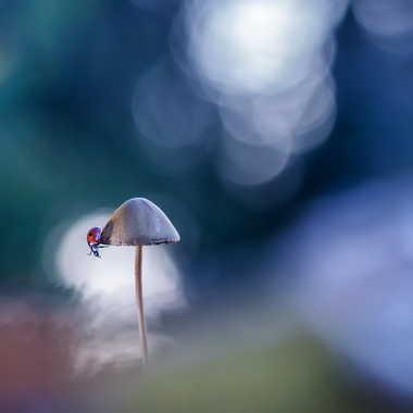 La belle et son champignon par Emmanuel Graindépice