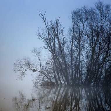 La Saône à Saint Georges par patrick69220
